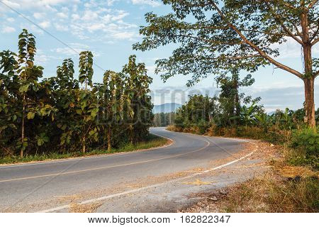Holiday Summer countryside road with tree wayside