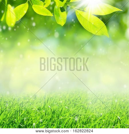 Spring nature background with bright green leaves and grass.