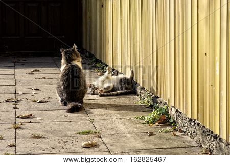 Two kitten playing in the street on sunny autumn day.Lazy cats in the street,wild cats.