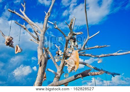 Tree With Talismans Against Blue Sky.