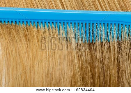 Close Up Of Blue Comb In Blonde Hair.