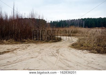 Country Road In Forest