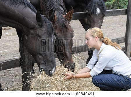 teenage girl feeds horse in the farm