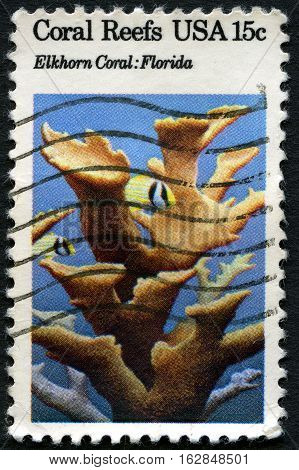UNITED STATES OF AMERICA - CIRCA 1980 : A used stamp printed from the USA showing Coral Reefs Elkhorn Coral in Florida circa 1980