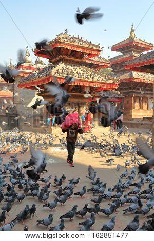 KATHMANDU, NEPAL - JANUARY 14, 2015: Pigeons flocking in large numbers on Durbar Square