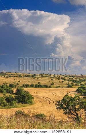 RURAL LANDSCAPE SUMMER. Alta Murgia National Park: Cornfield topped by clouds..Apulia (ITALY).Typical Apulian countryside of Murgia's plateau.