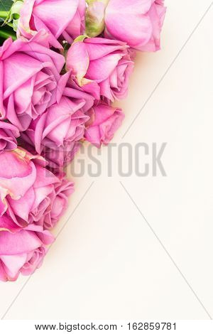 Valentines day violet fresh roses top view flat ly scene