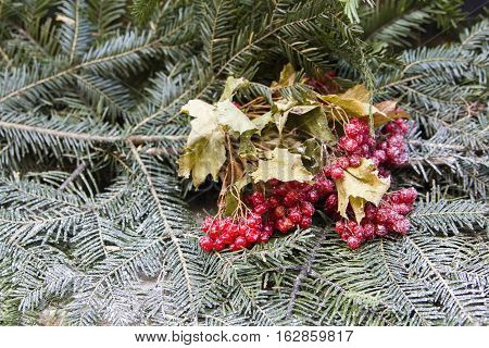bunch of red berries on firry branches