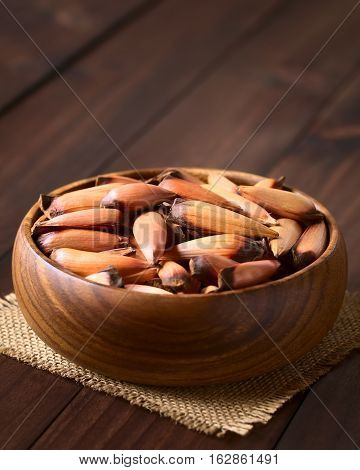 Raw edible Chilean pinones pine nuts of the Chilean pine or monkey puzzle tree (lat. Araucaria araucana) which usually get cooked and eaten as snack photographed with natural light (Selective Focus Focus on the pine nuts in the middle of the bowl)