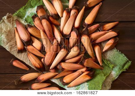 Raw edible Chilean pinones pine nuts of the Chilean pine or monkey puzzle tree (lat. Araucaria araucana) which usually get cooked and eaten as snack photographed overhead with natural light