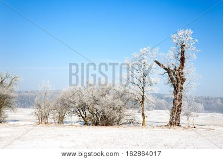 winter landscape with snow, trees and blue sky