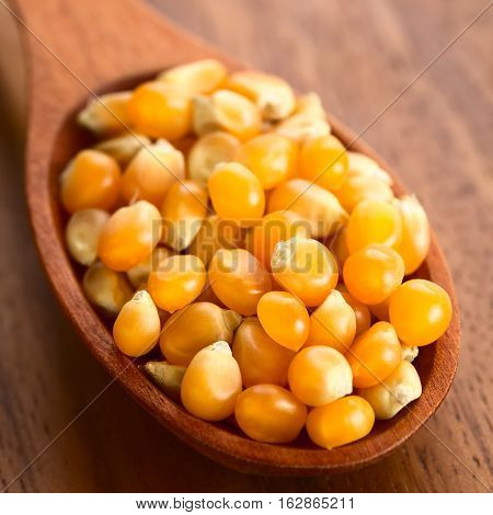 Yellow raw popcorn kernels on wooden spoon photographed with natural light (Selective Focus Focus one third into the kernels)