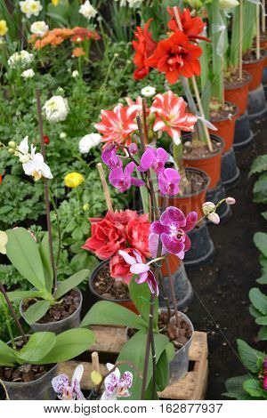 A variety of pretty flowers including amaryllis and orchids
