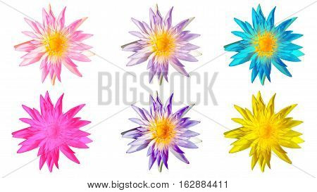 Isolated waterlily flower Lotus flower Multi color of Waterlily