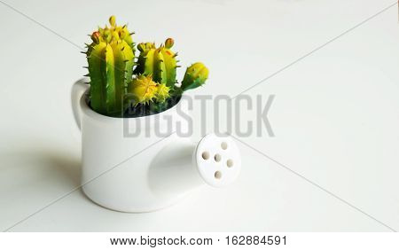 Cactus symbol of durability endurance and stability forever.Cactus in the pot on white background