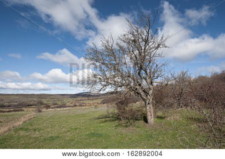 Bare tree on winter. Picture taken in San Millan de Lara, Burgos, Spain