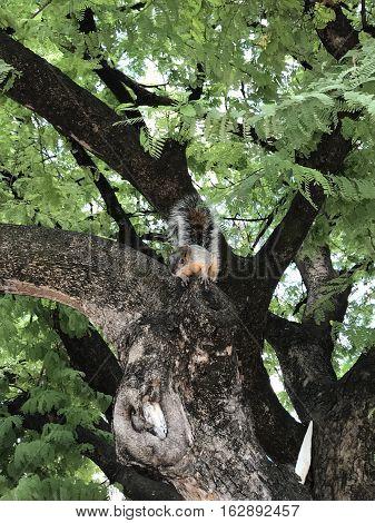 ardilla sobre árbol en profunda concentración a la espera