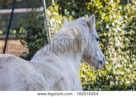a cute white horse in the farm