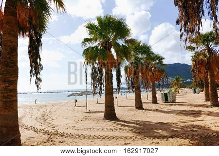 Palm trees on yellow sand tropical beach Teresitas Tenerife Canary Islands