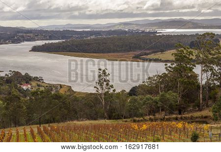 Vineyard and winery on the Tamar river bank viewed from Bradys Lookout in the Launceston region Tasmania