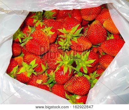 resh strawberry from the farm on the mountain