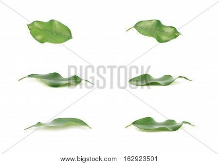 Leaves of green isolated on white papper