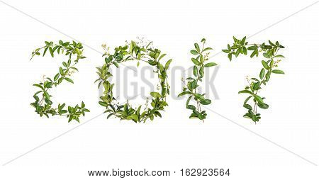 2017 word of creeper flower isolated on white background