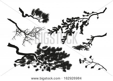 The branches of trees. Black silhouette on a white background. Drawing of pine fir and cherry. Vector illustration
