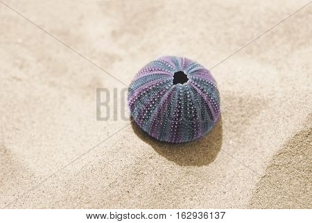 One violet skeleton of sea urchin on sand