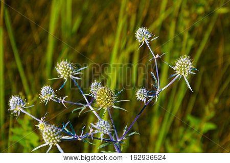A Beautiful Spiky Flower.