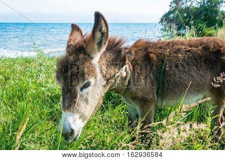 Little Donkey On The Shore Of Lake Issyk-kul.