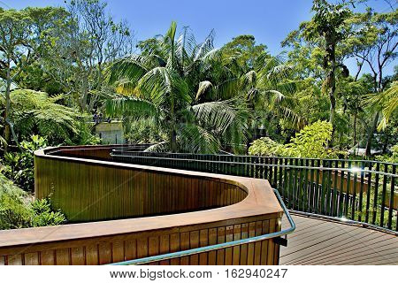 Lush tropical nature walkway at Taronga Park Zoo Sydney Australia.