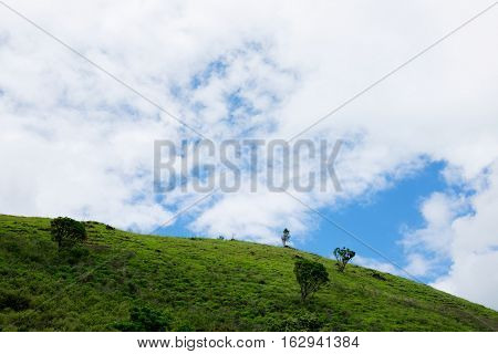 Green hill with thin sown trees and cloudy sky at the background
