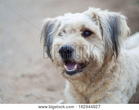 Long hair dog lay down dirty smile