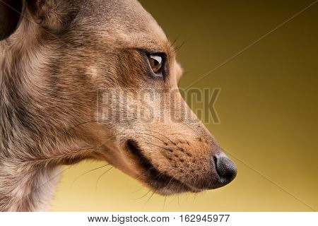 Close-up portrait of the cute dog face