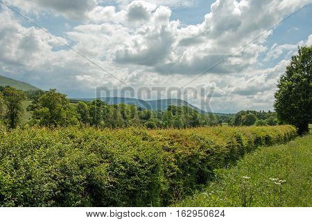 Summertime shrubbery and trees in the Welsh countryside,