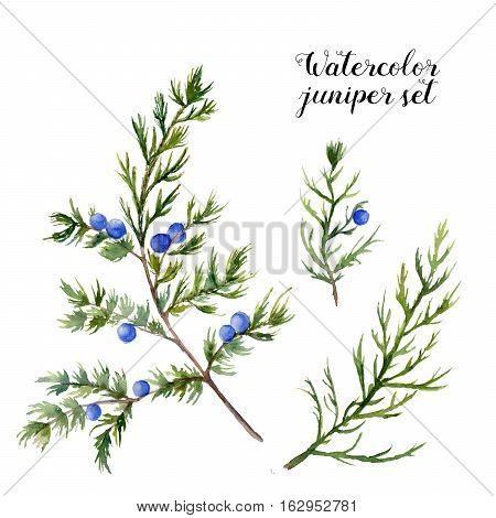 Watercolor juniper set. Hand painted evergreen branch with berries on white background. Botanical illustration for design or print