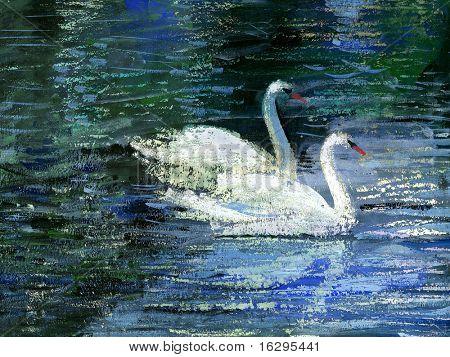 Two white swans on lake