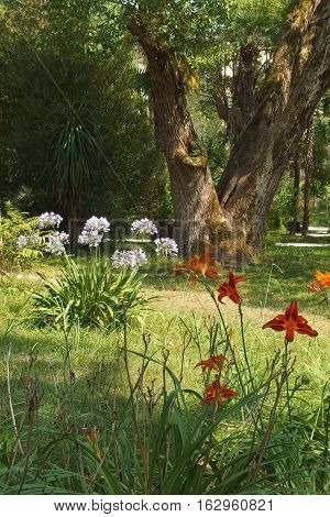Abkhazia Sukhumi botanical garden with flowers in the foreground