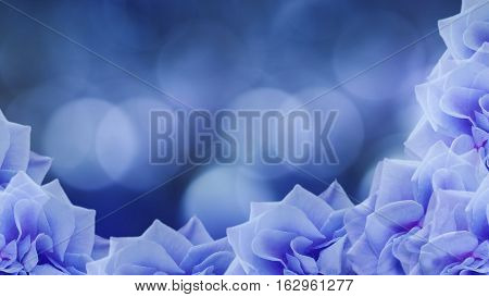 blue roses flowers on blurred blue background. floral background. blue wallpaper for design. Nature.