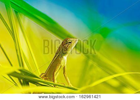 Beautiful Indian gecko inside a bush looking out green foliage background morning light Kolkata India - nature stock photograph