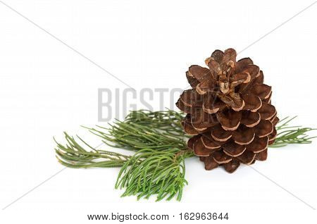 Closeup photo pine cone and branch isolated on white