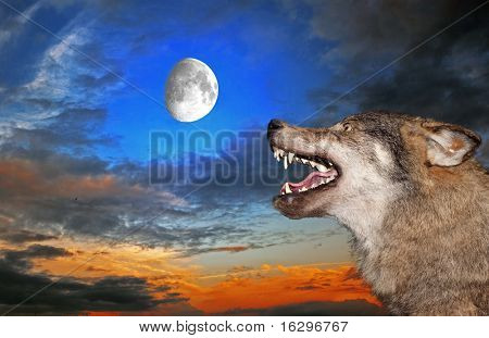 poster of The wolf howls under the moon