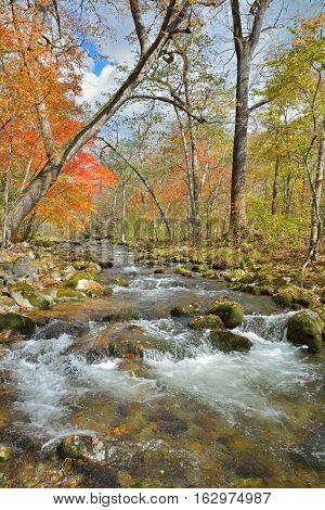 A landscape on small woodsy river autumn.