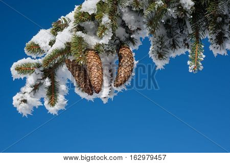 Snowy branch against blue sky background. Image contains many free space for winter holyday blank.