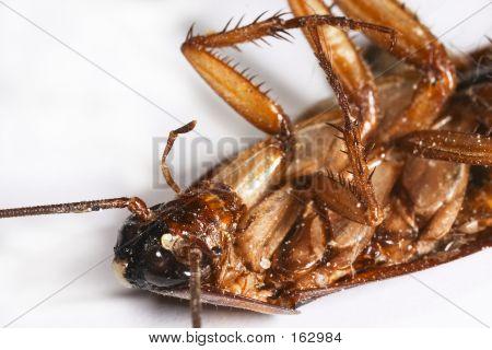 Roachtif