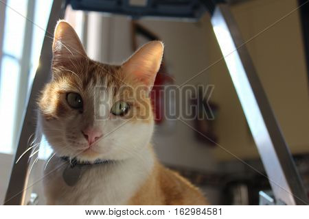 White and orange cat on a staircase with a heart pendant