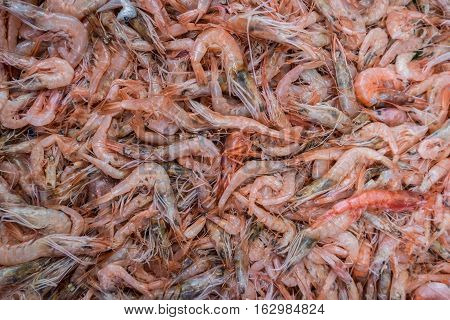 A large group of red shrimps sold in the Akko market