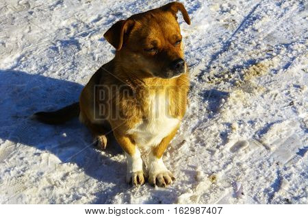 Small frozen non-pedigreed dog on snow in winter