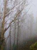 Fog precipitation on the island of Madeira, Portugal poster